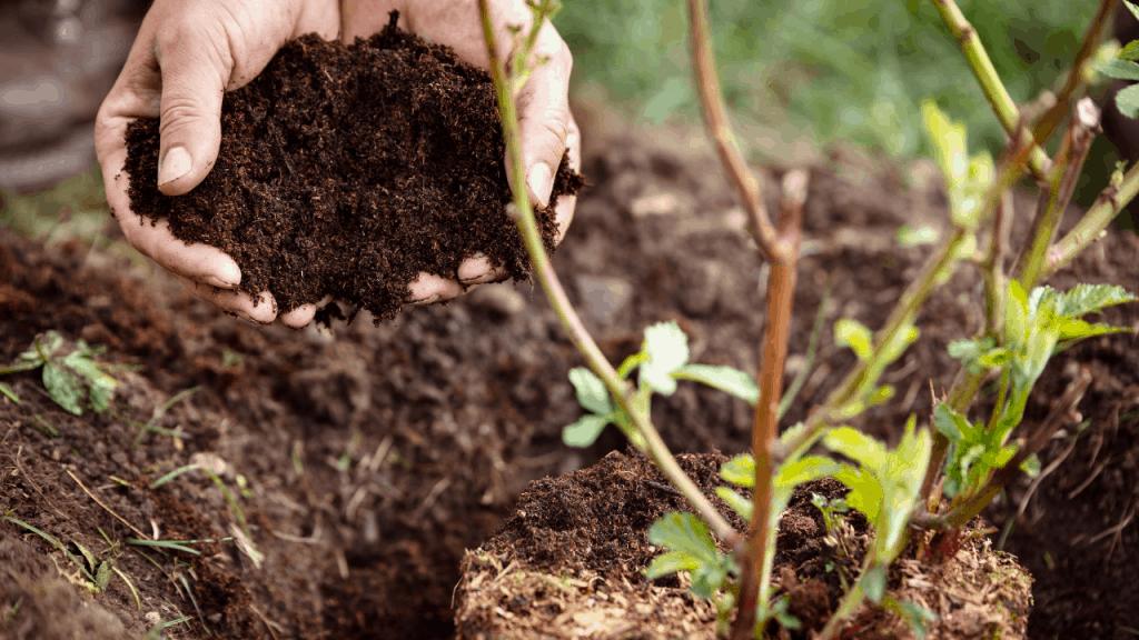 best fertilizer for Blackberries
