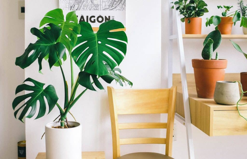 best ways to water indoor plants while on vacation
