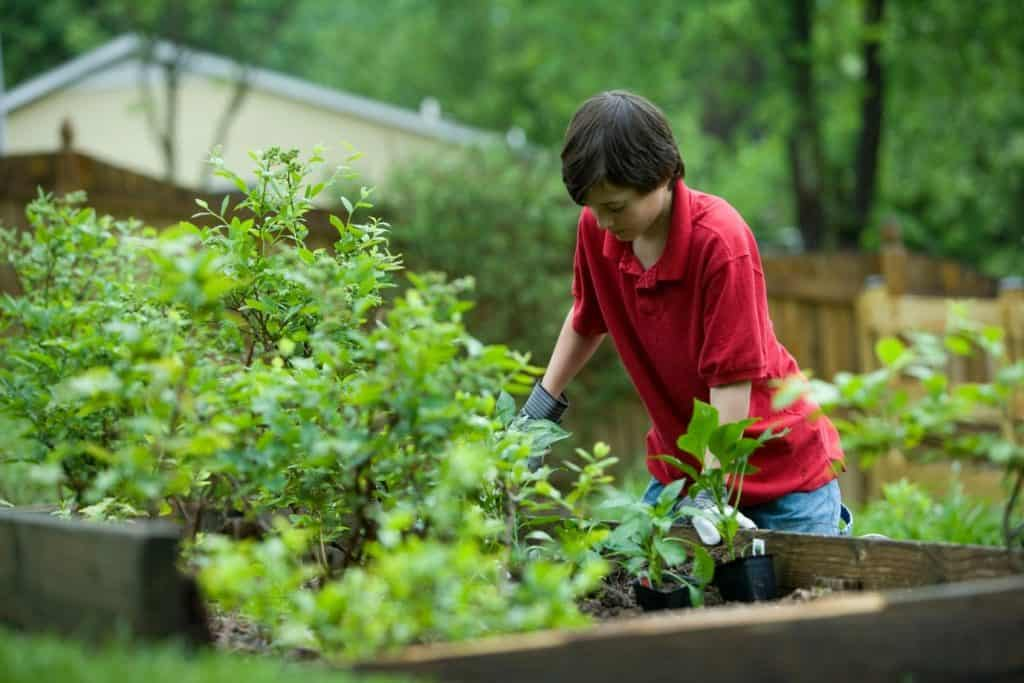 permaculture gardening for beginners