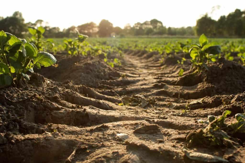 Improve Soil for Gardening