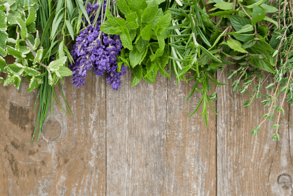 Herbs that are fast and easy to grow within the house