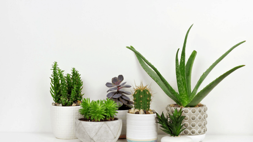 Succulent Plants Plant Grow And Care Detailed Guide Gardening Tips And Tricks