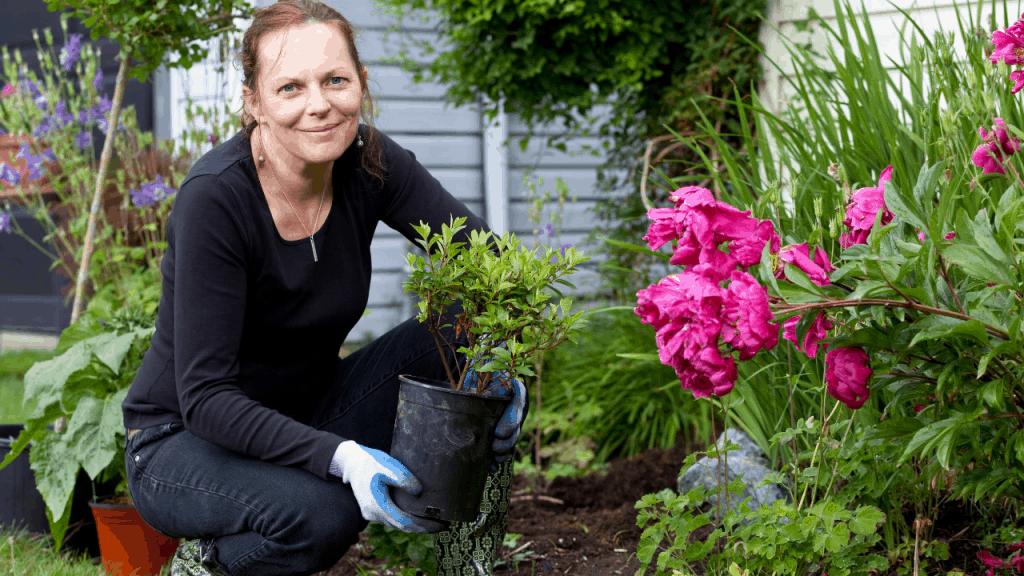 grow and care Azalea Plant