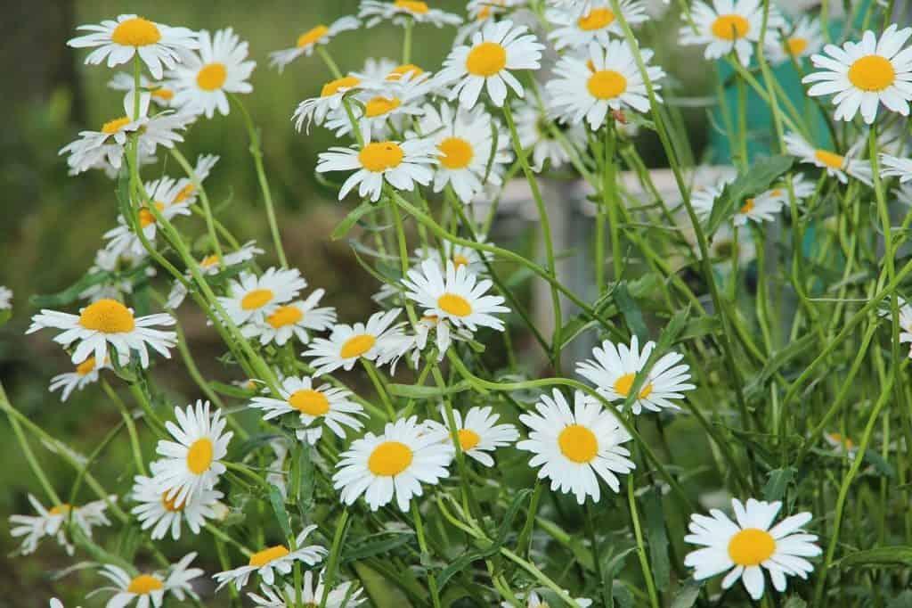 indoor plants for allergies
