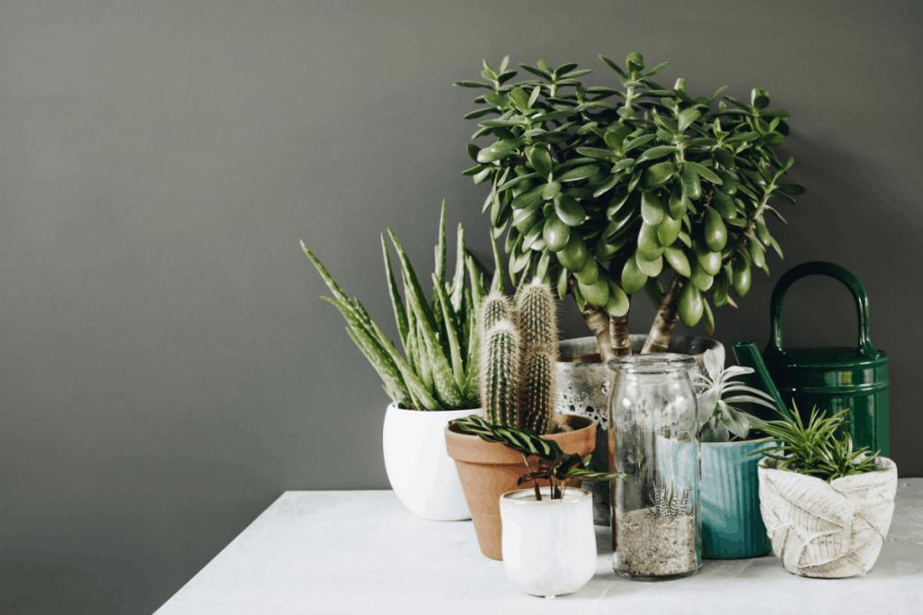 fastest growing indoor plants