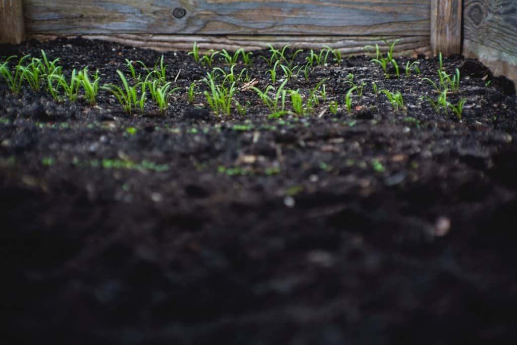 raised bed gardening tips