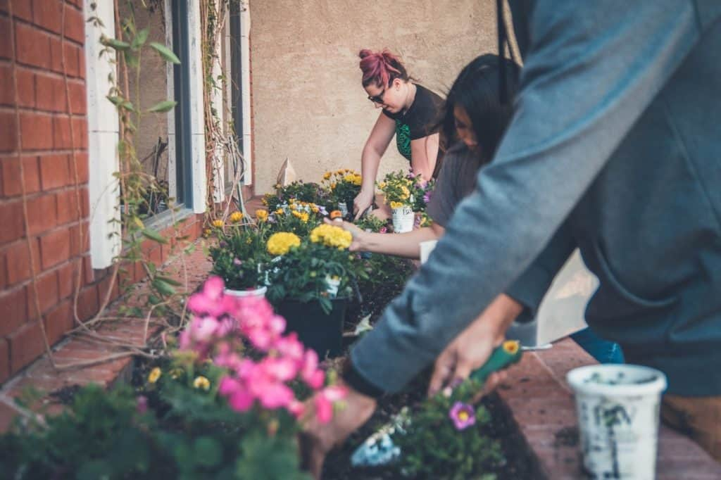 How to Start a Gardening Business With No Money