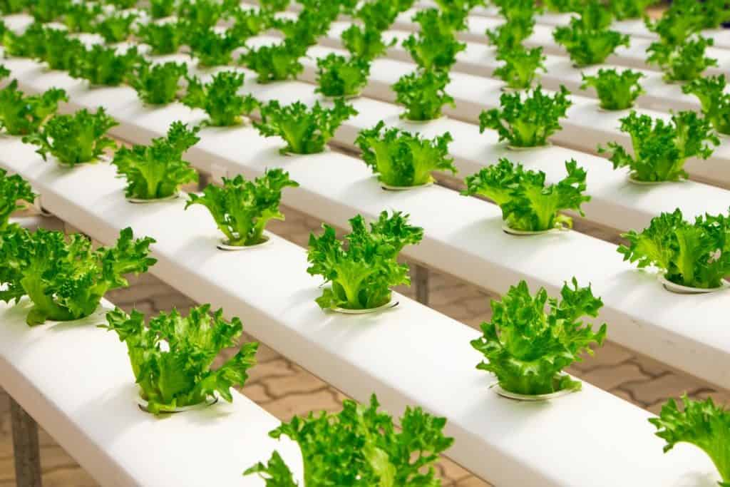 essential supplies for hydroponic gardening