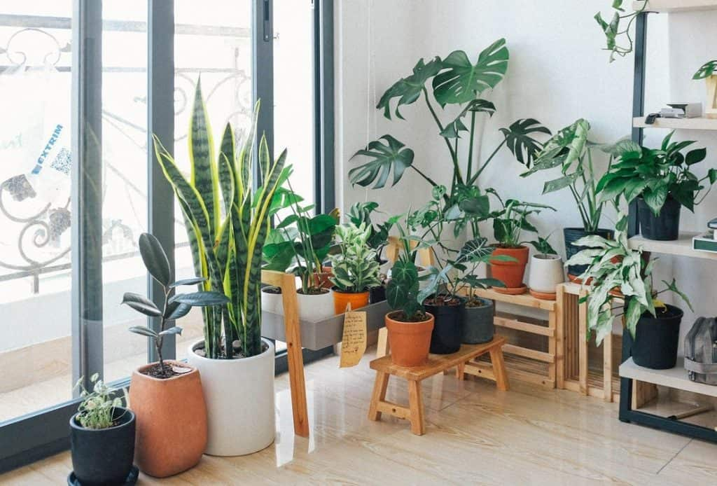 Houseplants That Clean the Air and Safe for Pets