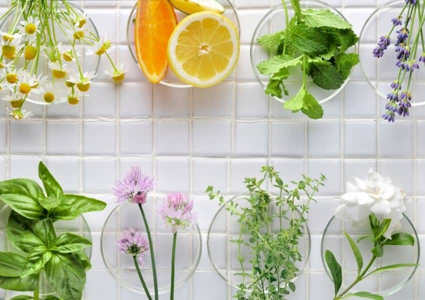 How to preserve fresh herbs from garden