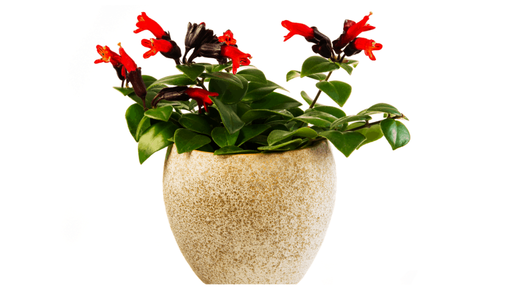 indoor house plants safe for pets