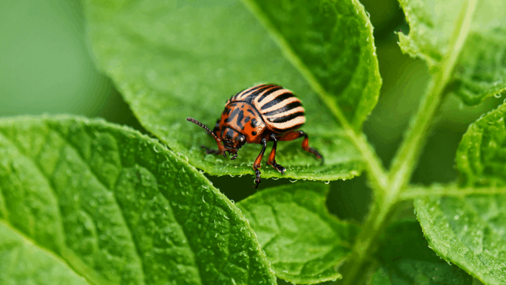 get rid of pill bugs in the garden