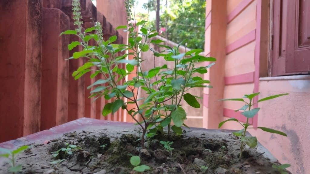 plants for prosperity