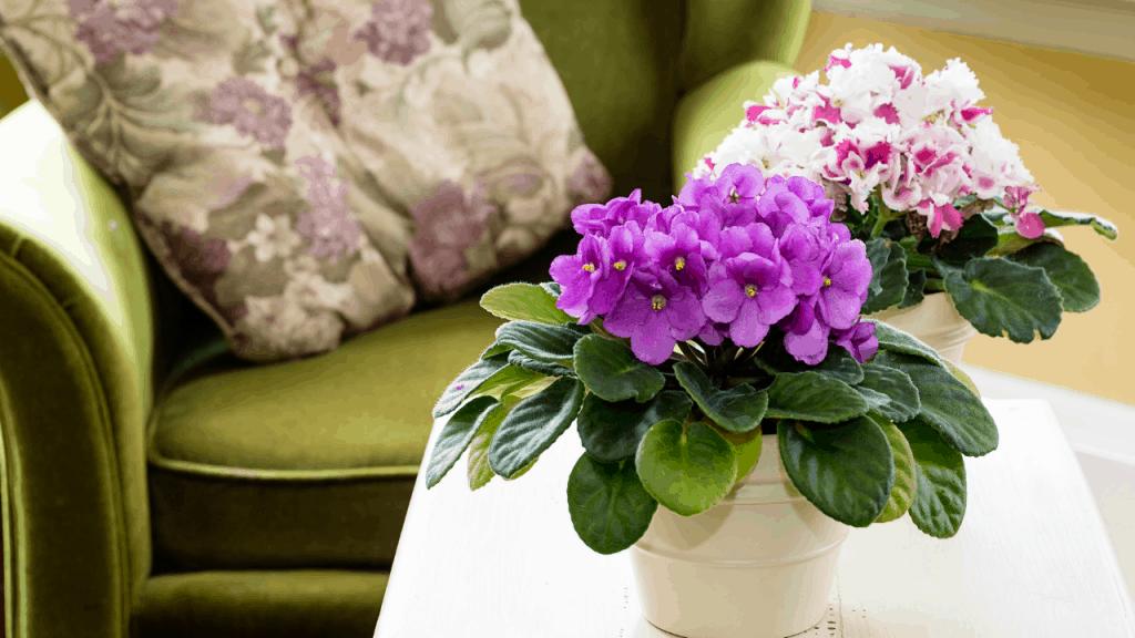 plants safe for pets