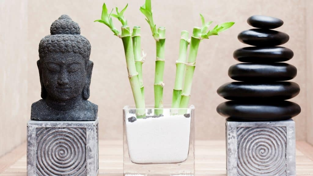 plants that bring money and good luck