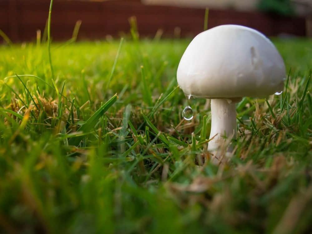 types of mushrooms in a garden