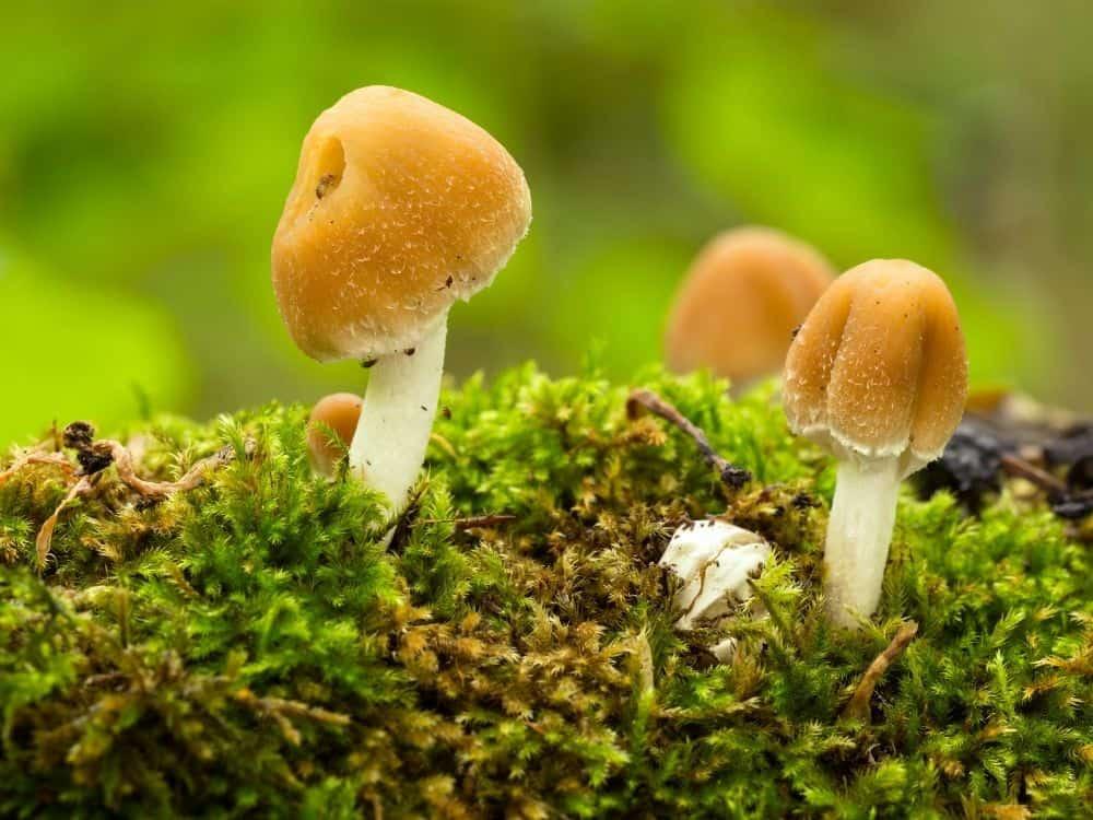 types of mushrooms in garden