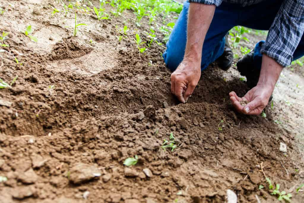 Learn different ways you can improve bad soil