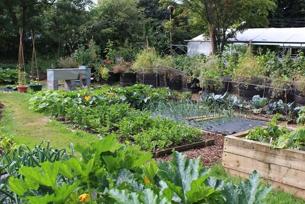 difference Between Permaculture and Organic Gardening
