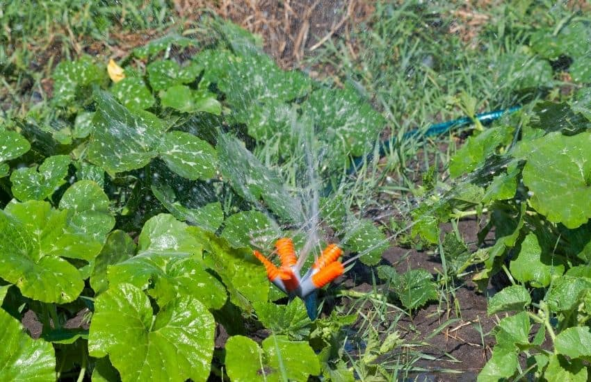 purify water for outdoor gardening