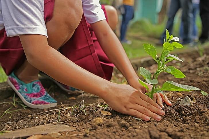 Garden Soil vs Topsoil