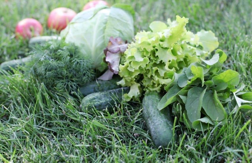 How to Remove Grass in a Vegetable Garden