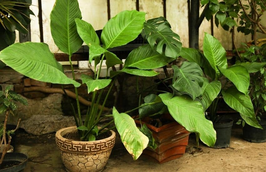 How to make Plants grow faster at home