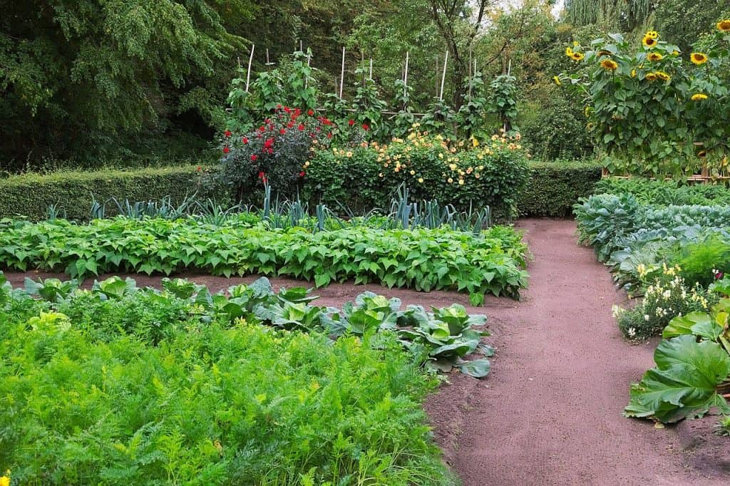 how to use preen in vegetable garden