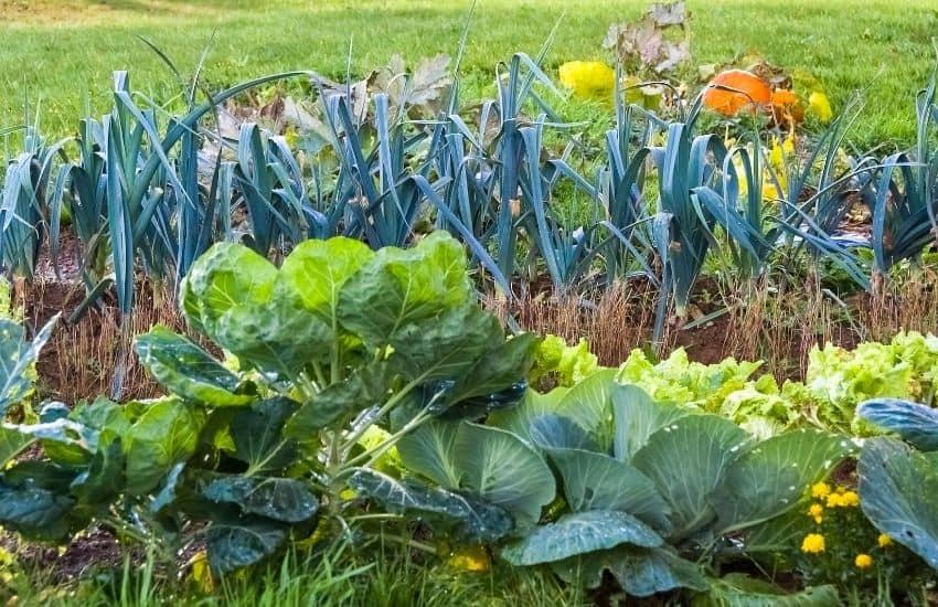 Remove Grass in a Vegetable Garden