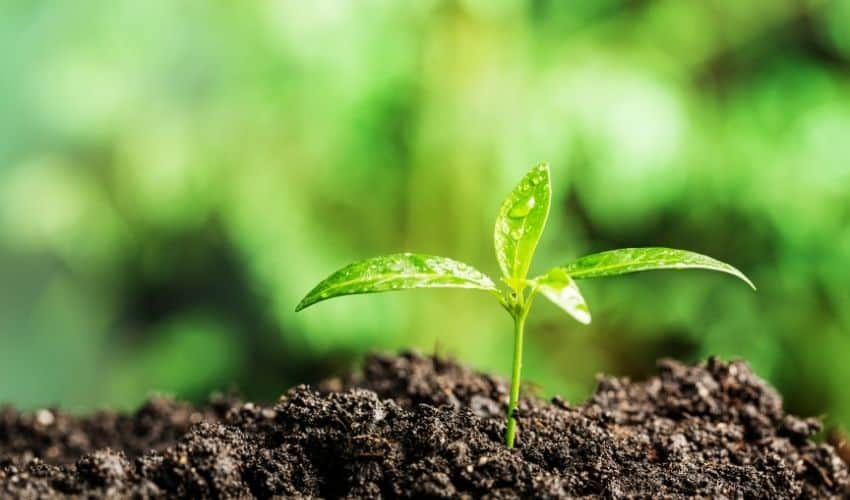 What Layer of Soil Is Best for Growing Plant