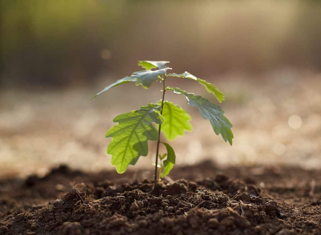 What Layer of Soil Is Best for Growing Plants