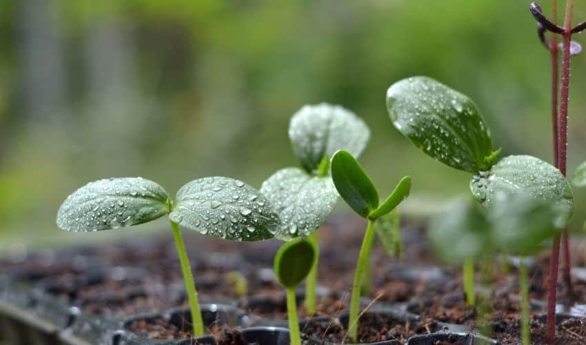 Which fertilizer makes plants grow fast