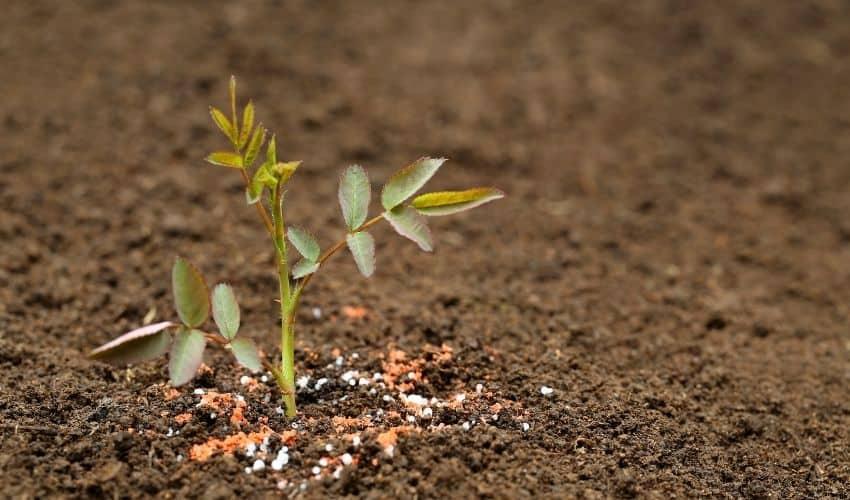 best fertilizers to grow flowers faster