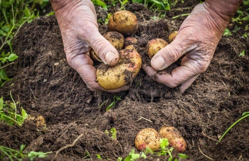 compost for vegetable garden