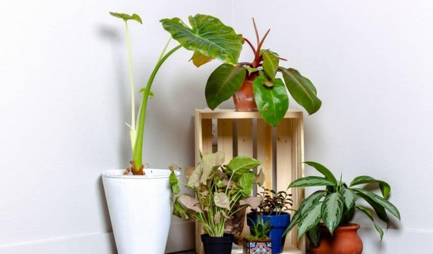 fast-growing plants from seeds
