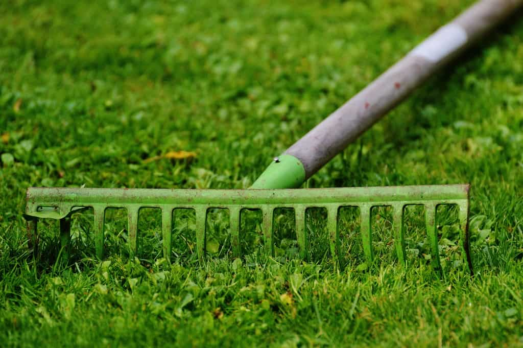 techniques to successfully remove grass from your vegetable garden