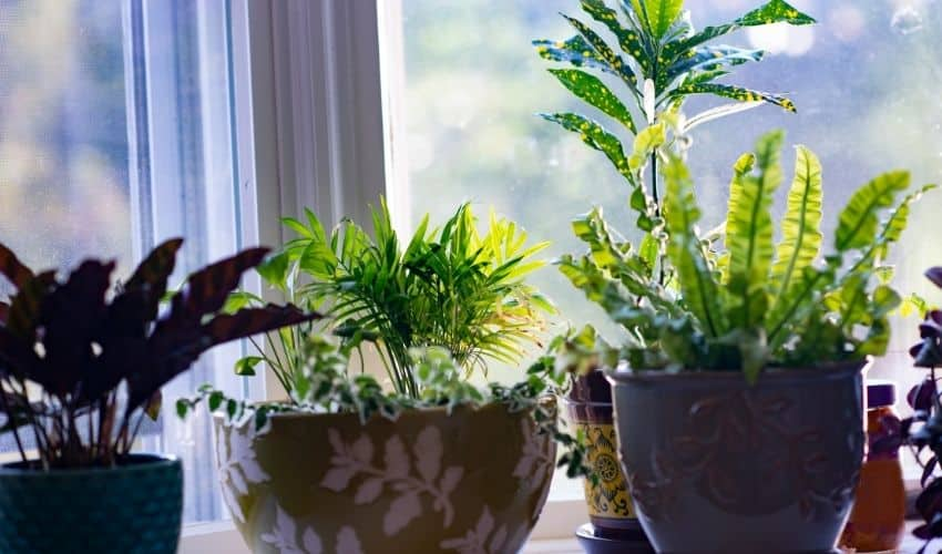 useful tips to make plants green again