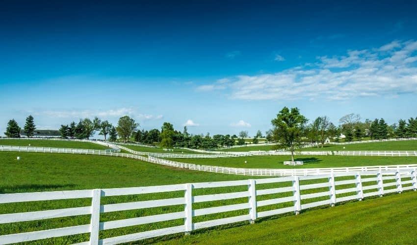 Tips about planting Kentucky Bluegrass