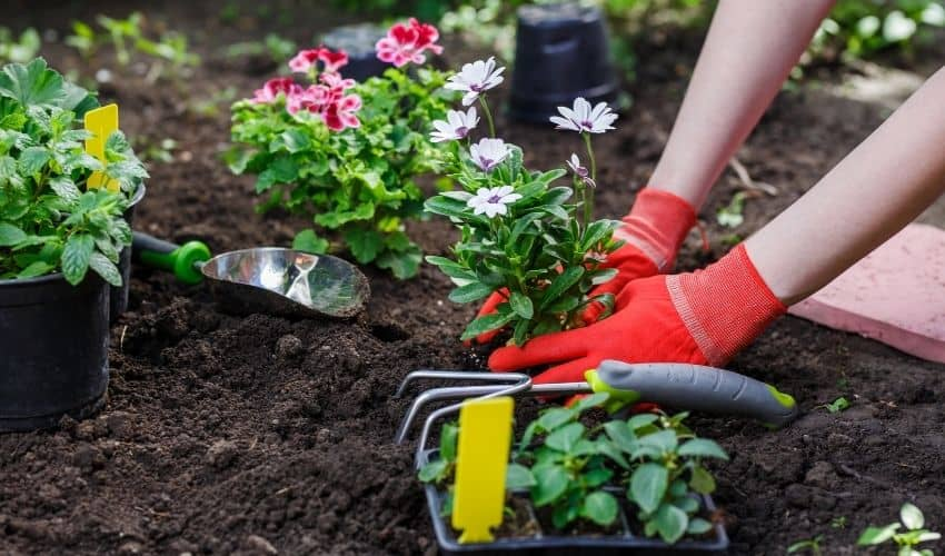 What is used as lime for gardening