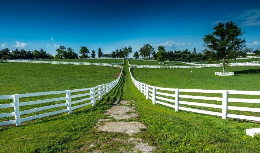 planting Kentucky Bluegrass