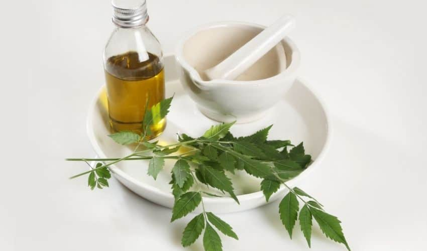What Is Neem Oil Used for in Organic Gardening