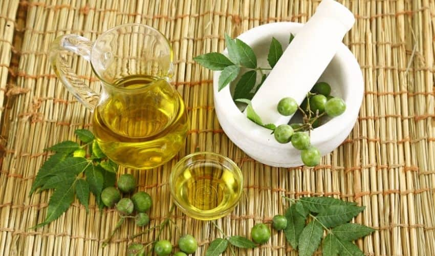 how neem oil is used in organic gardening