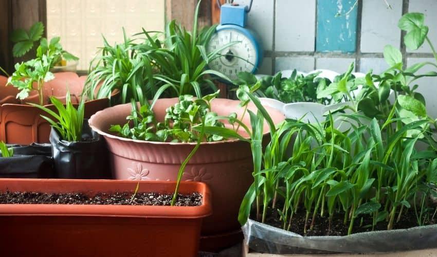make balcony garden