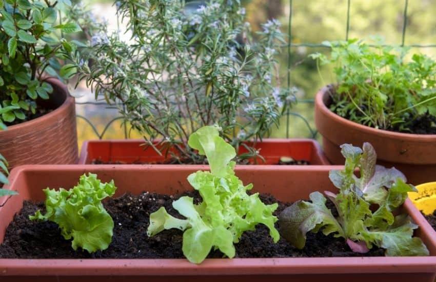 Apartment Balcony Gardening Ideas, Balcony Gardening Ideas