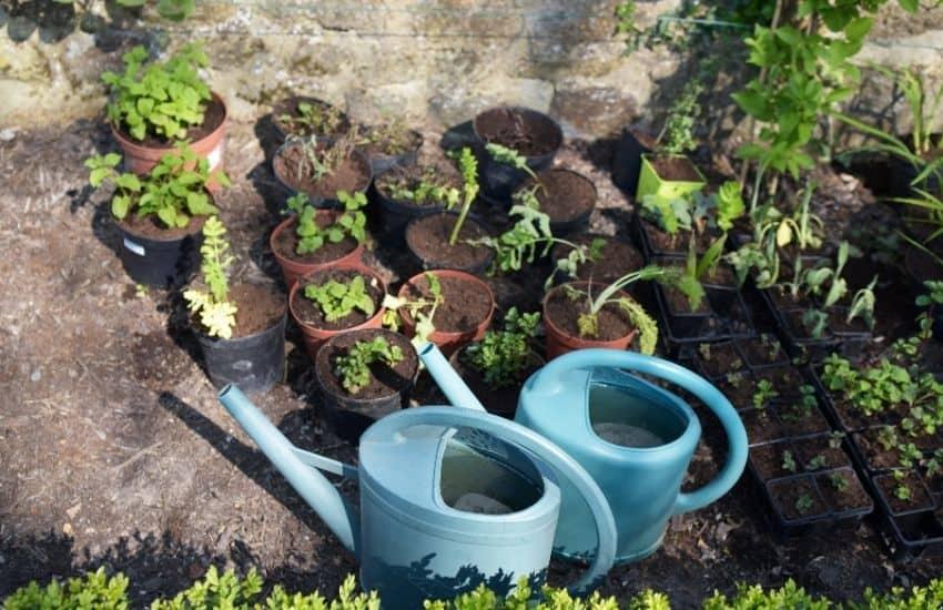 How often to water vegetable garden in summer