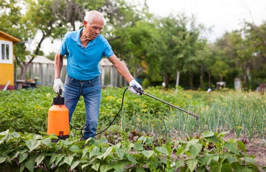 best organic pesticide for vegetable garden