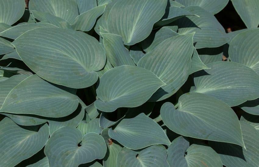 big green leaf plant