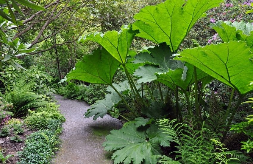 large green leaf plants outdoors
