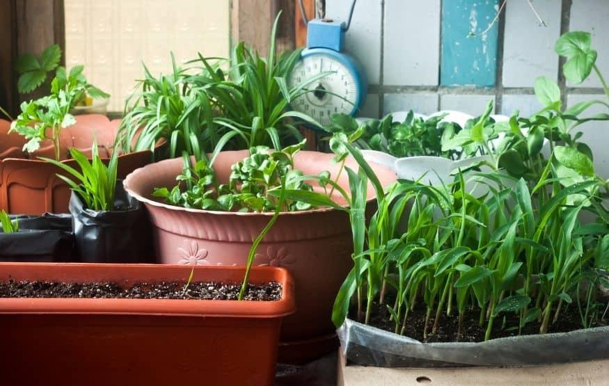 start a small balcony garden