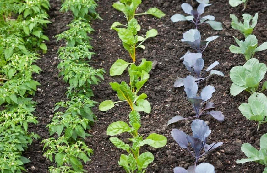 How can I keep my vegetable garden watered while on vacation